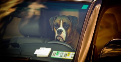 Tennessee law lets people break into hot cars to save pets (2)