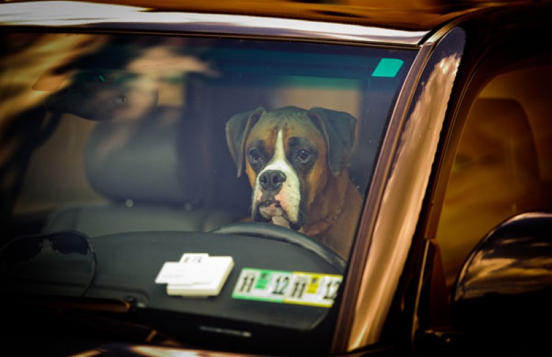 Tennessee law lets people break into hot cars to save pets