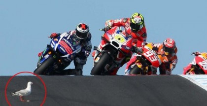 Seagull headbutted by Moto GP racer (1)