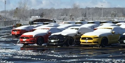 A lot full of 2016 Shelby GT350 Mustangs waiting for delivery (2)