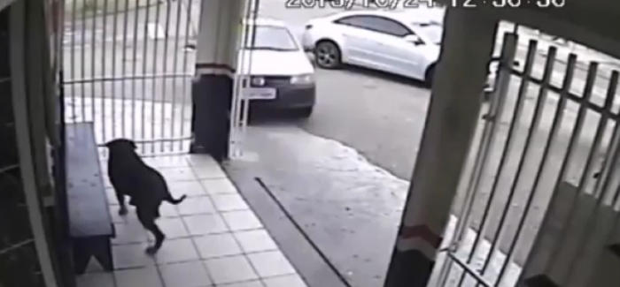 Super lucky dog almost gets hit by out of control car (1)