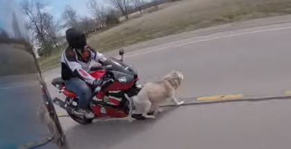Motorcycle vs Dog and a close call with a big rig (1)