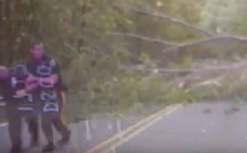 Officer Almost Gets Crushed By Falling Tree Video Dpccars