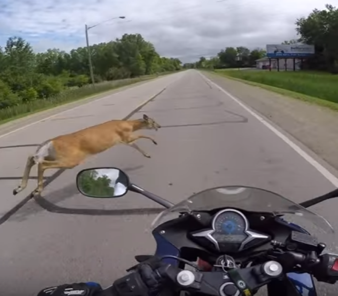 how to hit a deer on a motorcycle