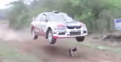 Rally car jumps over dog (1)