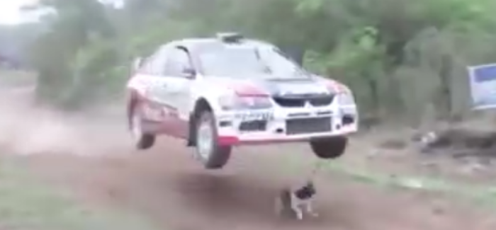 Rally car jumps over dog – Video