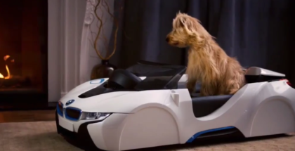 BMW dDrive For Your Dog  (1)