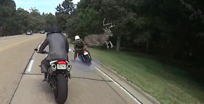 Deer vs Motorcycle (1)